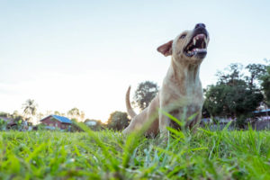 Bonney Lake Dog Bite Injury Attorney
